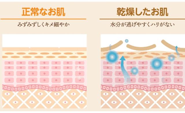 ビーネ(BIENE)美容液の成分と効果